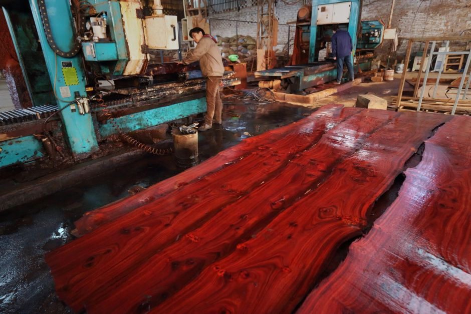 China Rosewood Demand For Furniture Is Decimating A Rare Slow